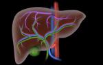 Gan và Cơ chế hoạt động của gan