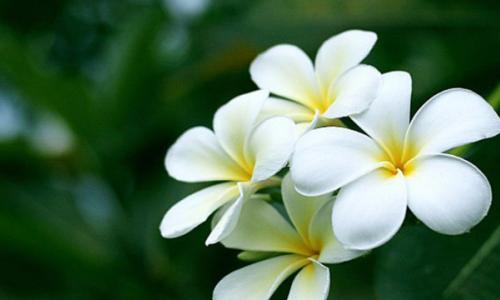 Hoa đối với sức khoẻ con người