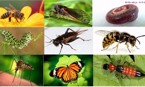Côn trùng - thực phẩm cứu cánh của tương lai