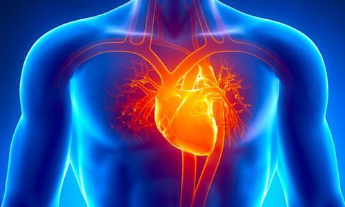 Những biến đổi hệ tim mạch