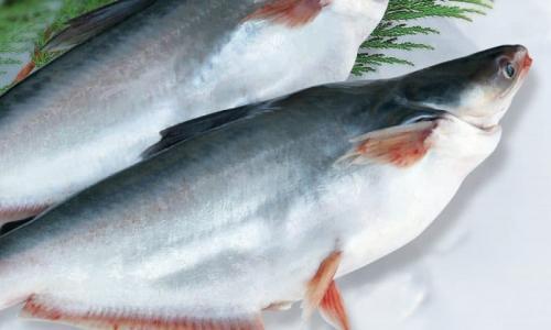 Món ăn thuốc từ cá tra