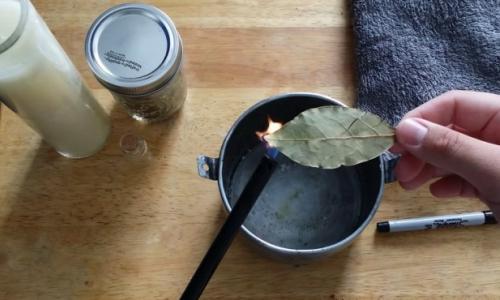 Điều gì xảy ra khi đốt lá nguyệt quế trong nhà?
