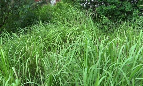 289 triệu USD bồi thường do tác hại thuốc diệt cỏ Roundup
