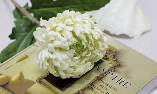 Bí quyết dưỡng da từ hoa cúc
