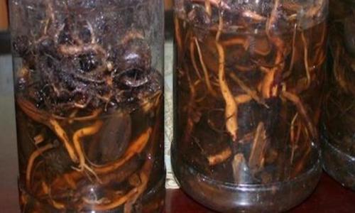 Quảng Nam: Hai người tử vong sau khi uống rượu ngâm rễ cây lạ