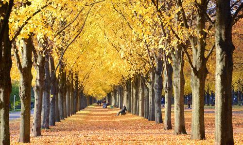 Lý do bạn dễ mắc bệnh vào mùa thu