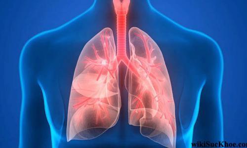 8 nguyên tắc ăn uống cho người bệnh phổi tắc nghẽn mạn tính