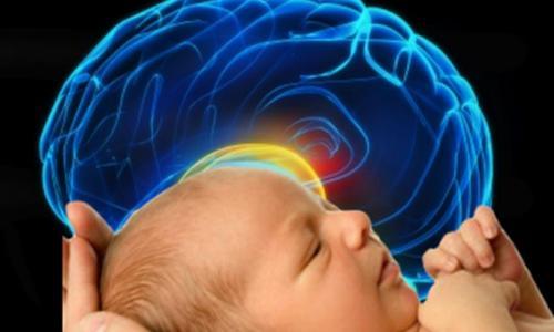 Sự hoạt động của bộ não trẻ em - Tầm quan trọng của việc giáo dục trẻ em dưới 7 tuổi