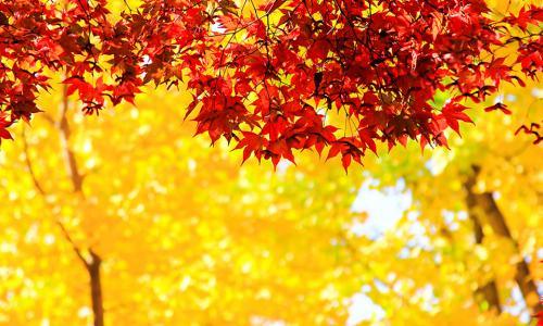 Mùa thu, những bệnh nào hay