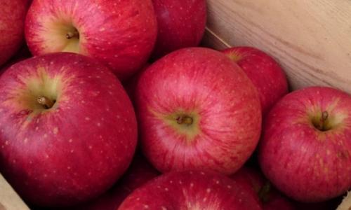 4 loại trái cây mùa thu rất tốt cho sức khỏe của bạn