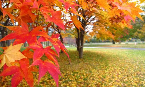 Sắc màu mùa thu tháng Tám