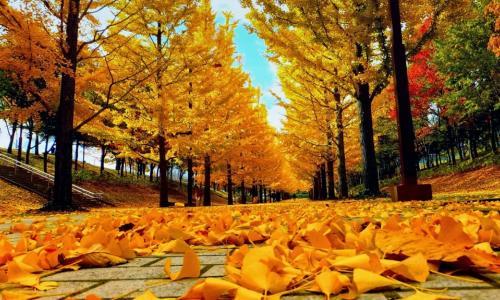 Những bệnh hay mắc mùa thu