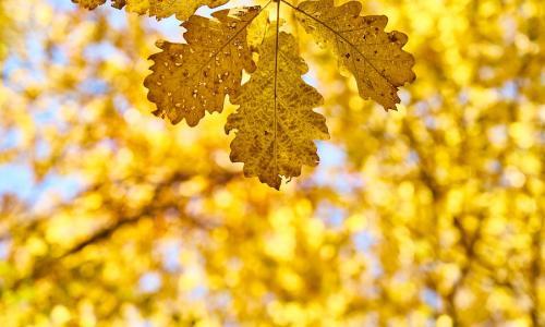 Sắc màu nào được yêu thích mùa thu này?