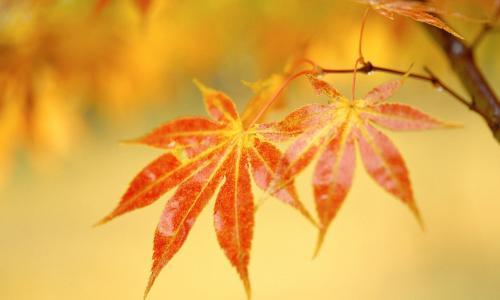 5 màu son không bao giờ lỗi mốt vào mùa thu