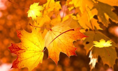 10 cách trang hoàng nhà cửa giúp mùa thu thêm ấm áp