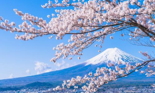 Nhật Bản: Đảng LDP tìm người lãnh đạo