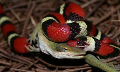 Xử trí khi bị rắn độc cắn