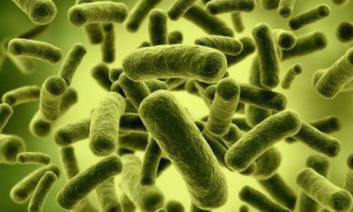 """5 vi khuẩn """"cứng đầu nhất"""" với kháng sinh"""